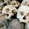 Pile of skulls — Stock Photo