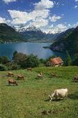 Lake Lucerne — Stock Photo