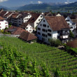 Vineyards in Rapperswil, Switzerland — Stock Photo