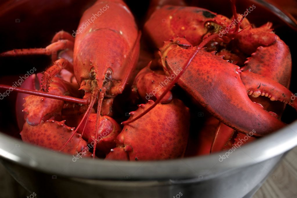 A pot of boiled lobster from Nova Scotia, Canada.  Stock Photo #3183510
