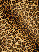 Leopard print background — Stock Photo