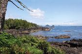 Wild Pacific Trail — Stock Photo
