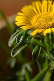 Gardening 2 — Stock Photo