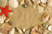 Seashell frame — Stock Photo