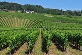 Swiss vineyards — Stock Photo