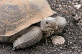 Poder de tartaruga — Fotografia Stock