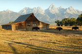 Celeiro e grand teton national park — Fotografia Stock