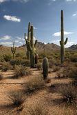 Desert Road — Стоковое фото