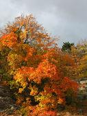 Beautiful multicolored tree. — Stock Photo