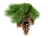 Fir tree with Christmas ball and tinsel — Stockfoto