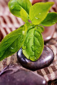 Spa treatment - rock and green plant — Stock Photo