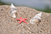 Sea stars between the two shells — Stock Photo