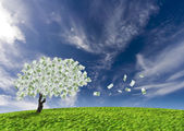 Cash tree — Stock Photo