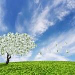 ������, ������: Cash tree