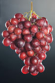 Pink grape cluster — Stock Photo