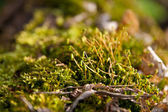 The young green moss — Stock Photo
