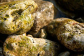 Texture wet stones — Stock Photo