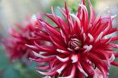 Piękny kwiat — Zdjęcie stockowe