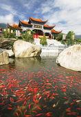 Kinesiska buddhistiska tempel med guldfisk — Stockfoto