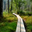 Boardwalk through trees — Stock Photo