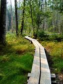 Boardwalk through trees — Stock Photo