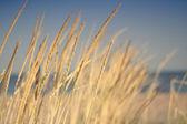 Gräs på havet — Stockfoto