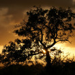 Sundown-Tree - Stock Photo