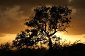Sundown-Tree — Stock Photo