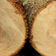 Royalty-Free Stock Photo: Close up of two logs freshly cutt off.