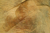 Close up of the freshly cut tree trunk — Stock Photo
