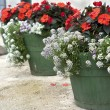 Flower pots - Photo