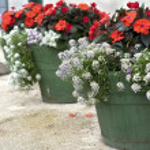 Flower pots — Stock Photo #3155149
