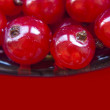 Red currant berries - Foto de Stock