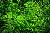 Backlit leaves — Stock Photo