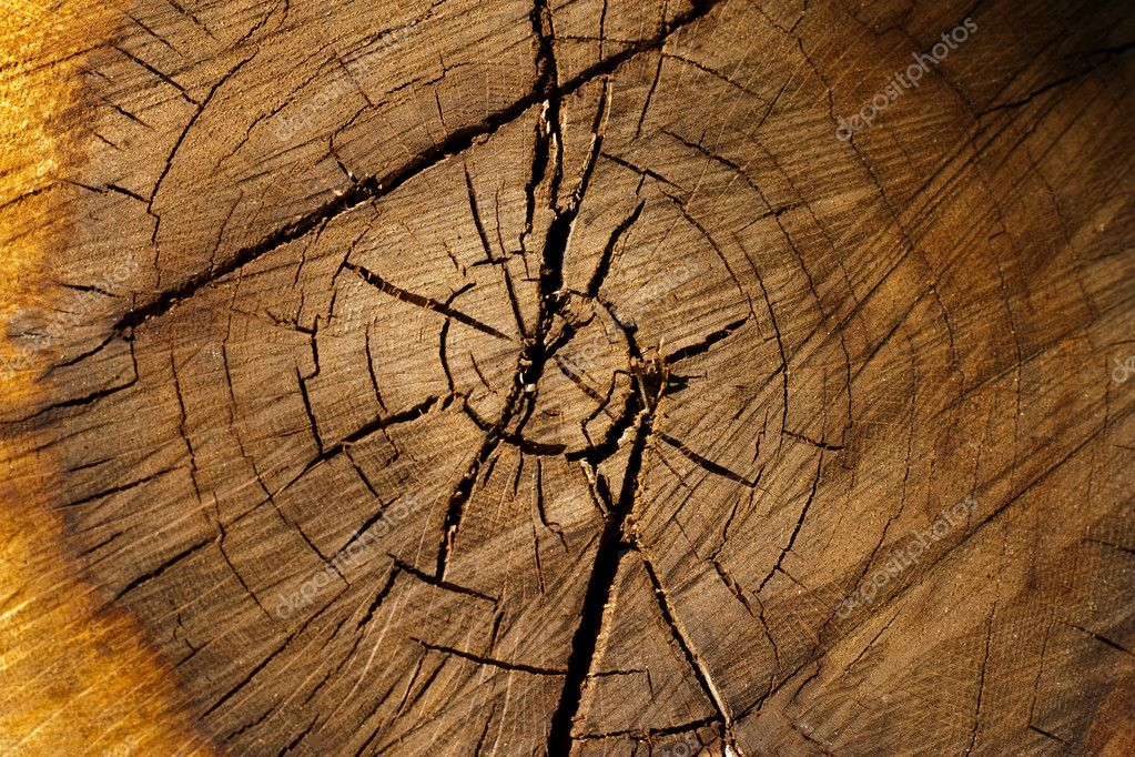 Abstract of the tree trunk cross section bathed in the ray of sunshine. — Stock Photo #3318771
