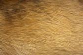 Dog fur close up — Stock Photo