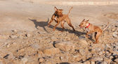Two dogs in motion blur — Stock Photo