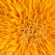 Sunflower abstract — Stock Photo