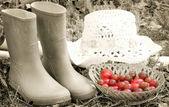 Tema di fattoria — Foto Stock