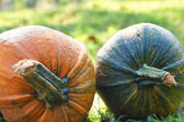 Two pumpkin — Stock Photo