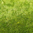 Background green rough organic texture — 图库照片