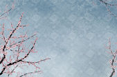 Decorativa cerejeira, padrão chinês — Foto Stock