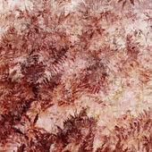 Felci decorativo, di sfondo rosso trama — Foto Stock