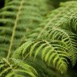 Closeup on fernery with dark blur background - focus - Foto Stock