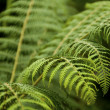 Closeup on fernery with dark blur background - focus - Stock Photo