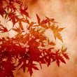 Textured decorative leaves of sweetgum for background or scrapbooking - 