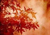 Folhas decorativas de liquidâmbar para plano de fundo ou scrapbooking com textura — Foto Stock