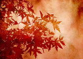 Textured decorative leaves of sweetgum for background or scrapbooking — Photo
