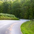 Curve road descending through a green forest - Foto Stock