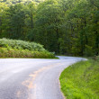 Curve road descending through a green forest - ストック写真